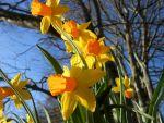 Mein Garten im Frühjahr