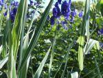 Mein Garten Frühjahr-Sommer