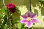 Garten Pia & Alain, japanisches Flair, Elsass, F