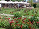 Rosengarten in Saverne, Elsass, F