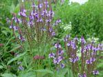 Garten der Zeiten, naturnahe Pflanzungen