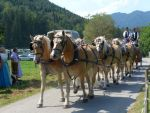 Rosstag Rottach-Egern 2016