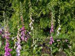 Merriments Gardens, East Sussex, GB