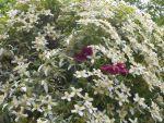 West Green House Garden, Hampshire, GB